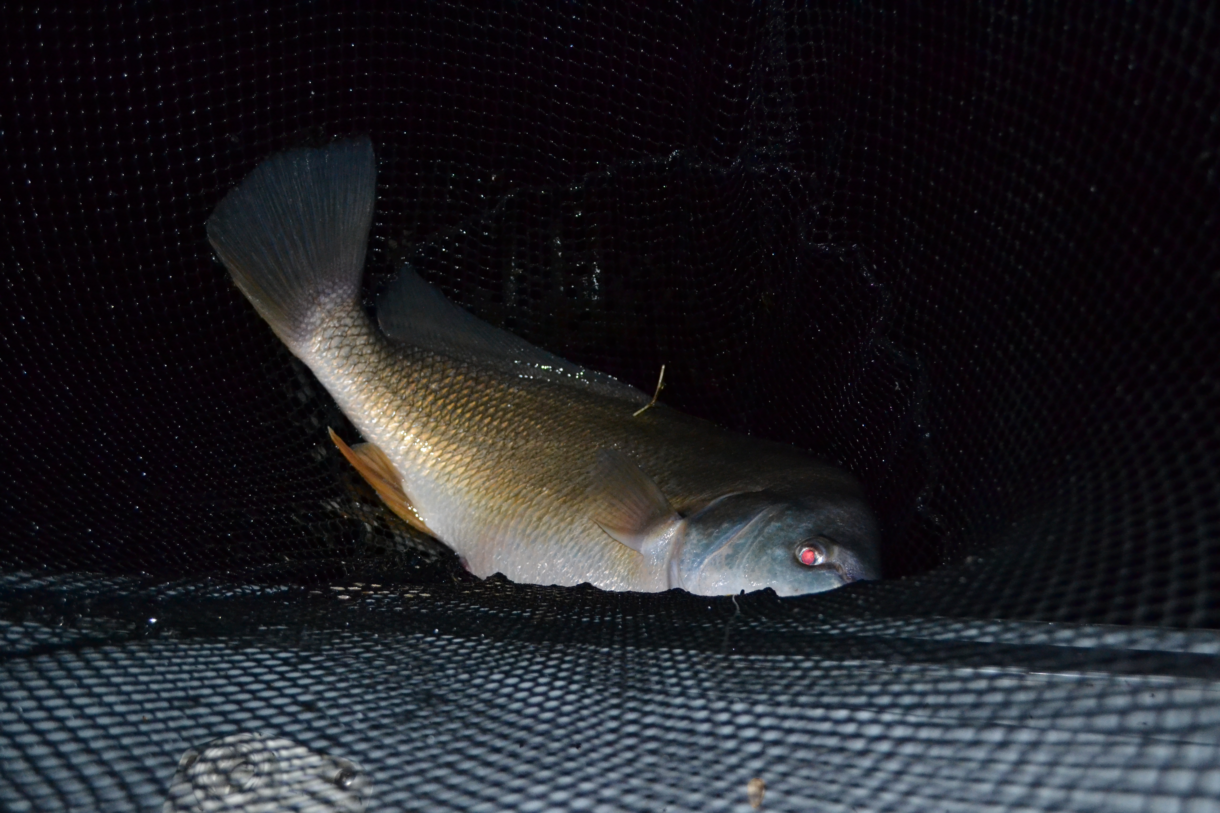 Bay Of Quinte Walleye Derby Night Fishing At Its Finest